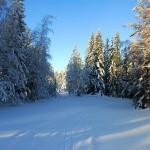 vybild Sörskog snö